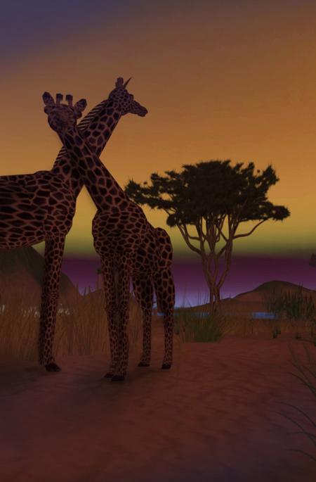 giraffes-sm2
